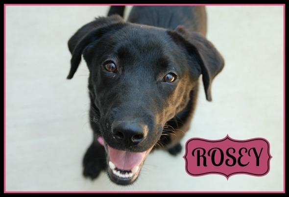 Meet Rosey